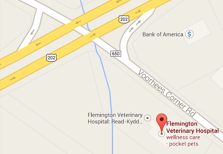 Local Map Listing for Flemington Veterinary Hospital